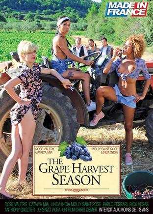 The grape harvest season
