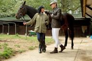 The Mademoiselle's Stallions
